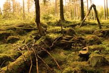 skogsandakt.jpg